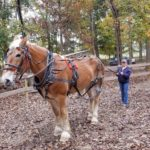 Country Time Equestrian Events
