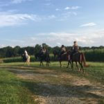 Group Horseback Rides