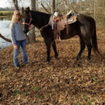 Black Jack the horse