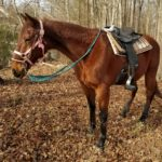 Billy Jack Trail Horse