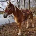 Macy the horse