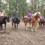 Beginner riding lessons