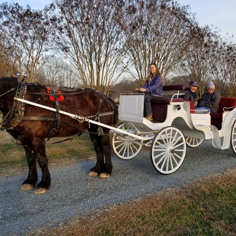 Carriage Rides